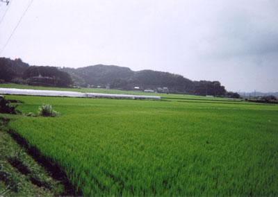 稲村城 全景