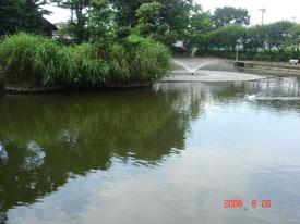 赤塚城 水堀跡