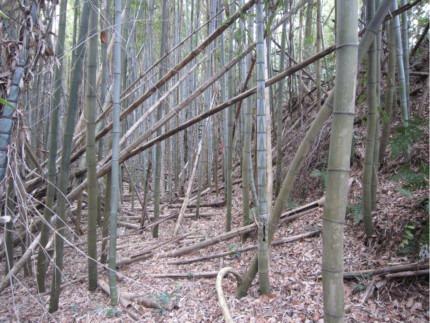 15腰曲輪の藪