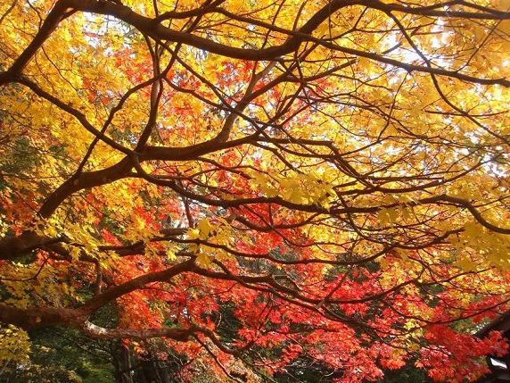 島松の紅葉