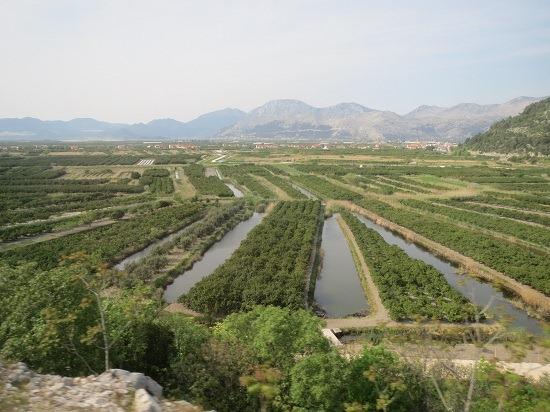 オプゼン・ミカン畑