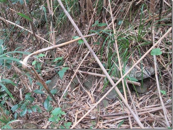 23藪の中に崩れた石垣