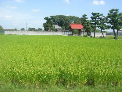 武蔵 多賀谷氏館(騎西町)