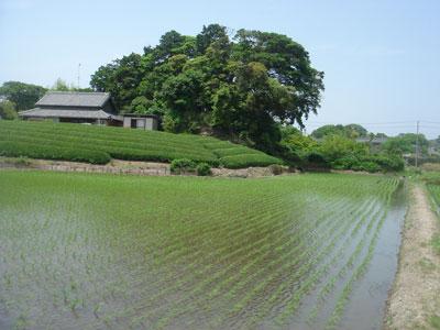 遠江 馬伏塚城(袋井市、旧浅羽町)