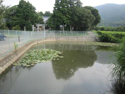 三河 五井城(蒲郡市)