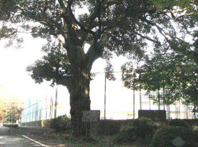 美濃 駒野城(海津市)